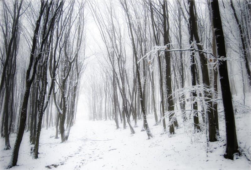 fryste snowtrees för dimma skog arkivbilder