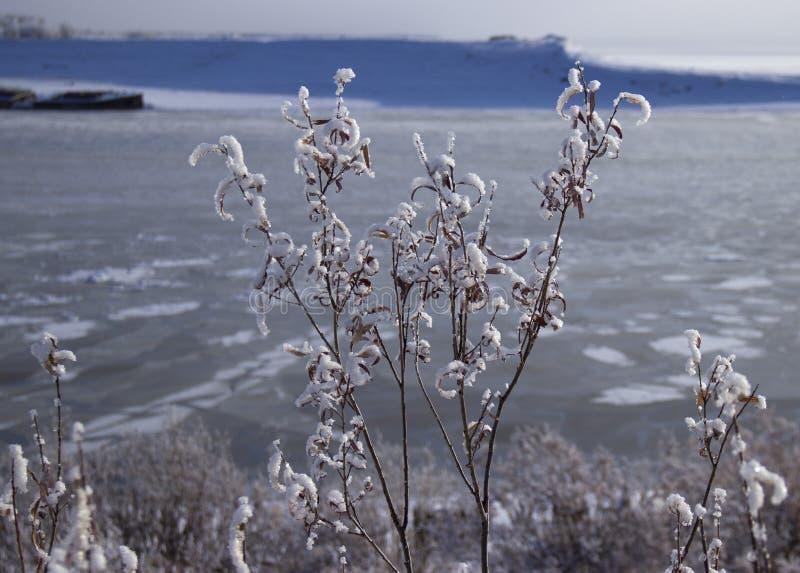 fryste vattnet i den Siberian floden arkivbilder