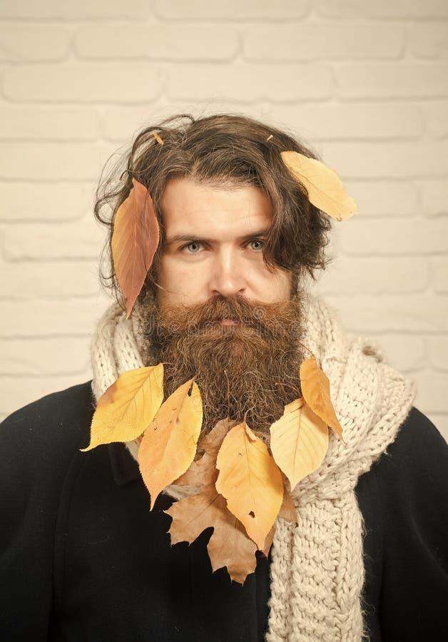Fryzjer i fryzjer męski, włosiana strata fotografia stock