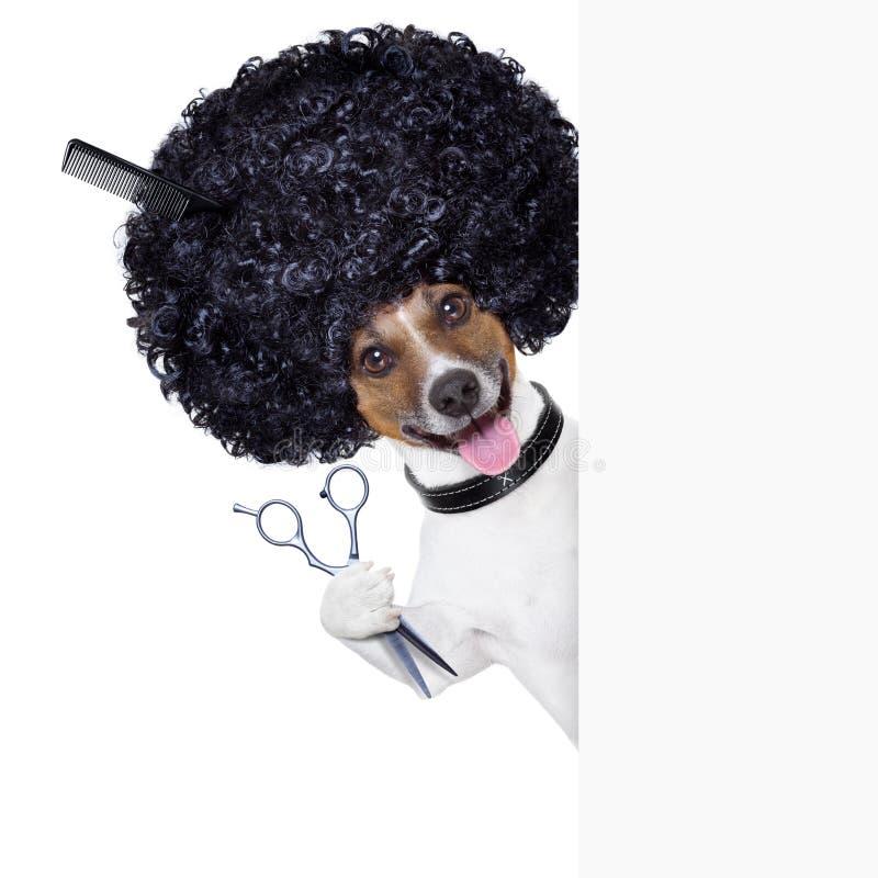 Fryzjer   pies zdjęcie royalty free