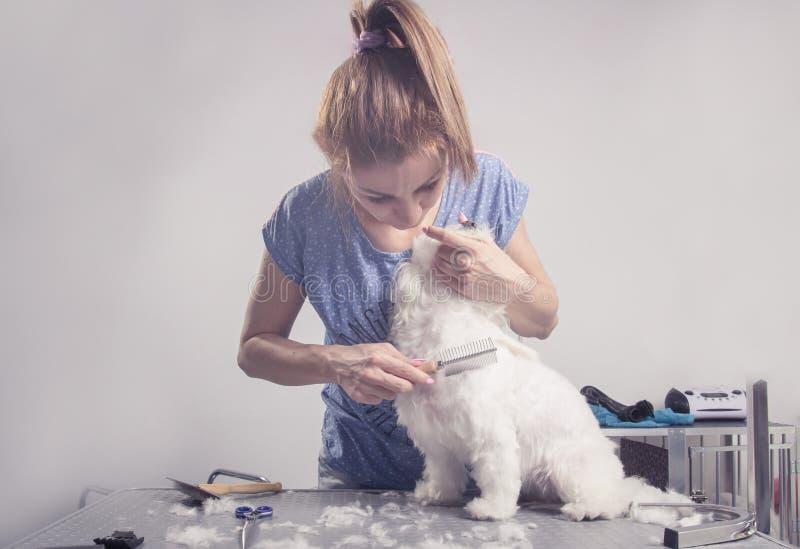 Fryzjer szczotkuje grzebieniowego psiego włosy futerko zdjęcia royalty free