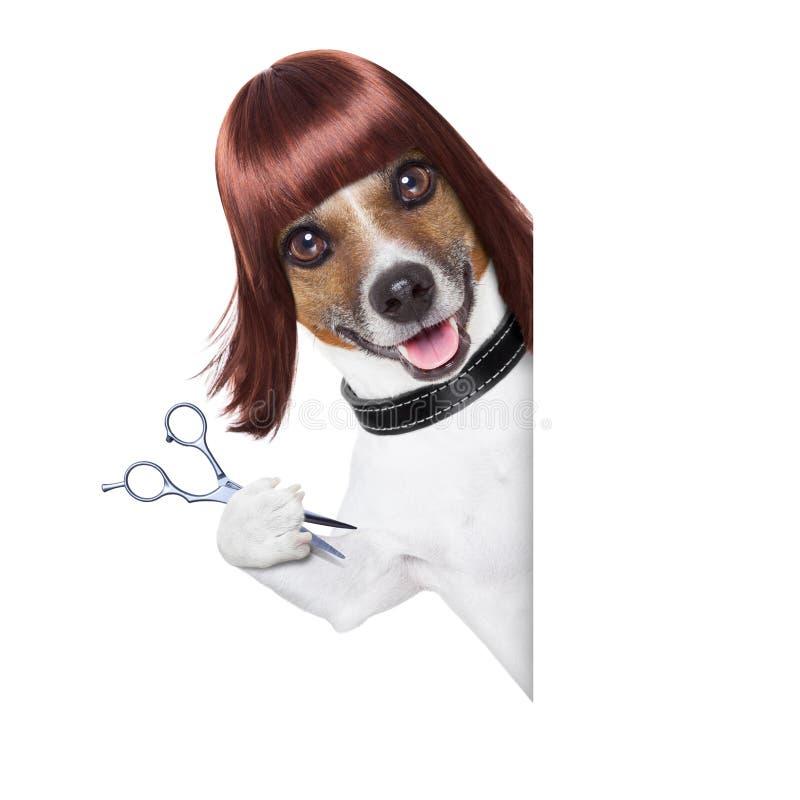 Fryzjera pies obrazy stock