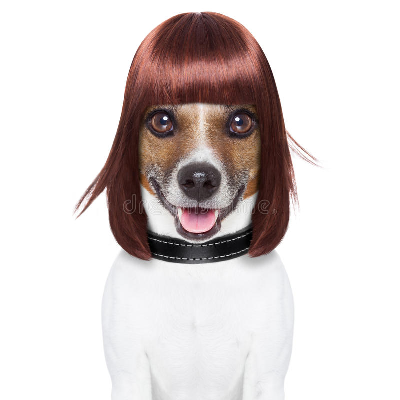 Fryzjera pies zdjęcia royalty free