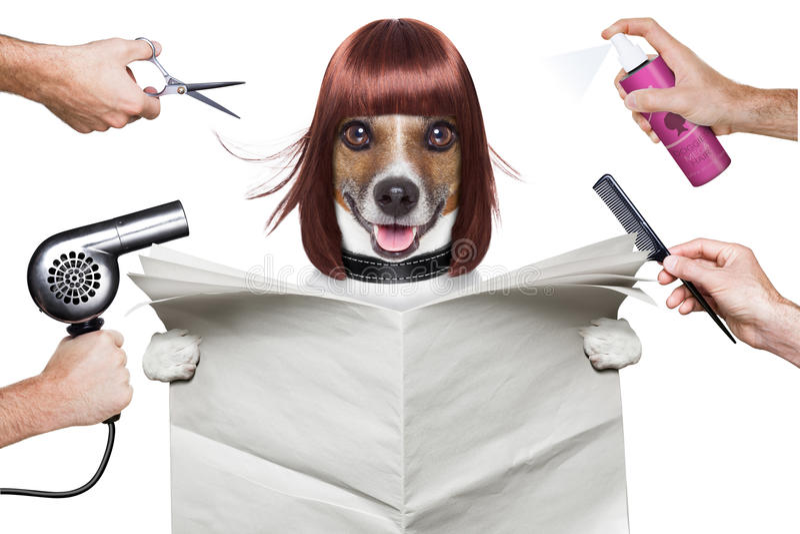 Fryzjera pies obraz stock