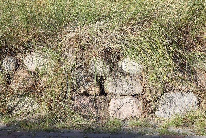 Fryzyjska kamienna ściana zasadzająca z europejczyk plaży trawą obraz stock
