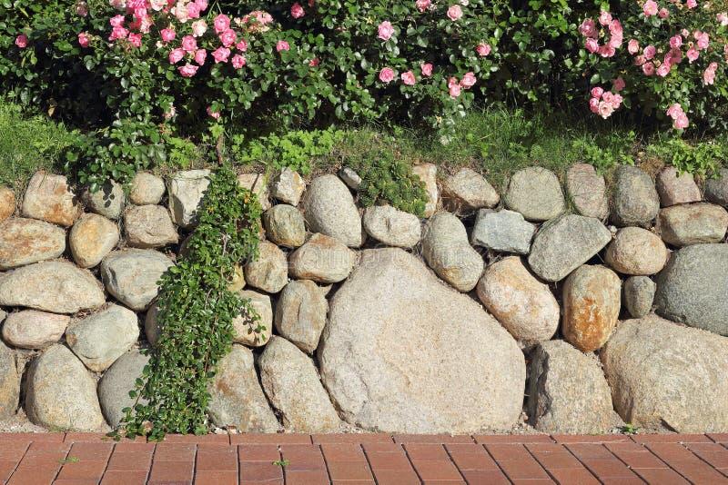 Fryzyjska kamienna ściana zasadzająca z rosebush zdjęcie royalty free