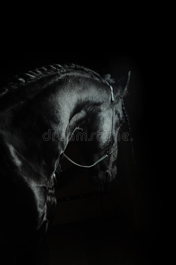 Fryzyjski koń na czerni obraz stock