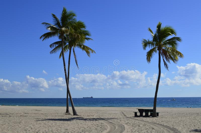 Ft. Lauderdale Beach. Bright blue skies and three palm trees on Ft. Lauderdale Beach in Florida. Picnic table on the sand and ships out at sea. Low horizon puffy stock photo