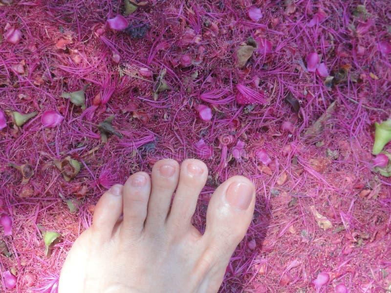 Fuß auf dem Boden lizenzfreie stockbilder