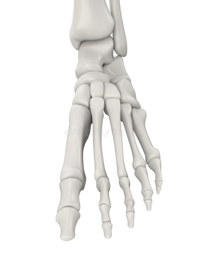 Gemütlich Knochenanatomie Menschliche Körper Fotos - Menschliche ...