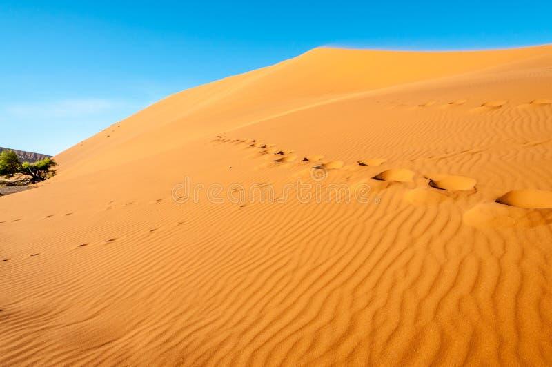 Fuß-Schritte in der Wüste lizenzfreie stockfotos