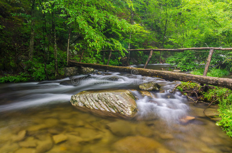 Fußbrücke, mittlere Zinke, Great Smoky Mountains stockbilder