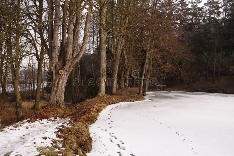 Fußdrucke im Schnee bedeckten Wald lizenzfreie stockfotografie