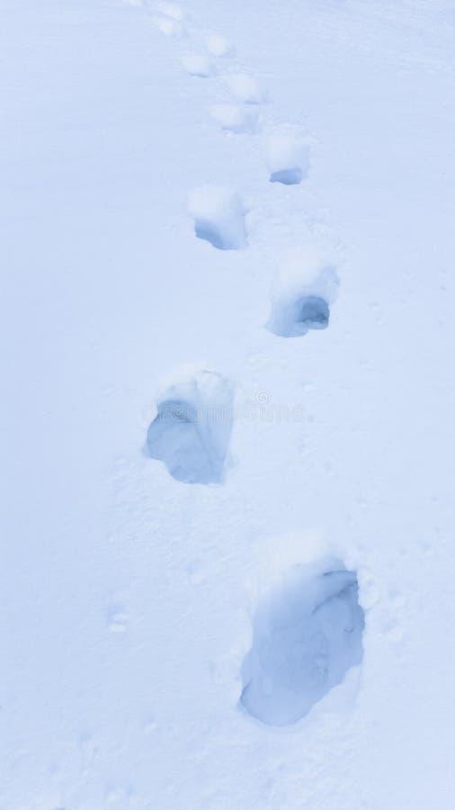 Fußschritte im Großen Schnee lizenzfreies stockbild