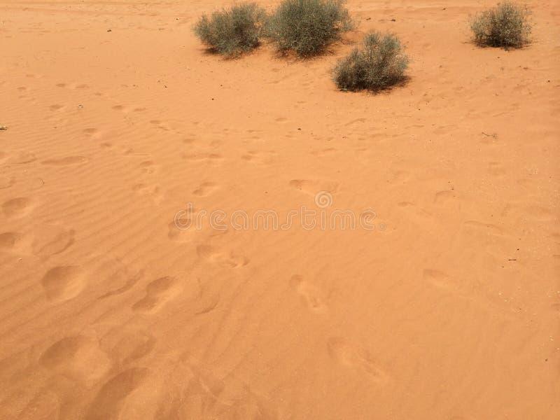 Fußschritte im Sand stockfotografie