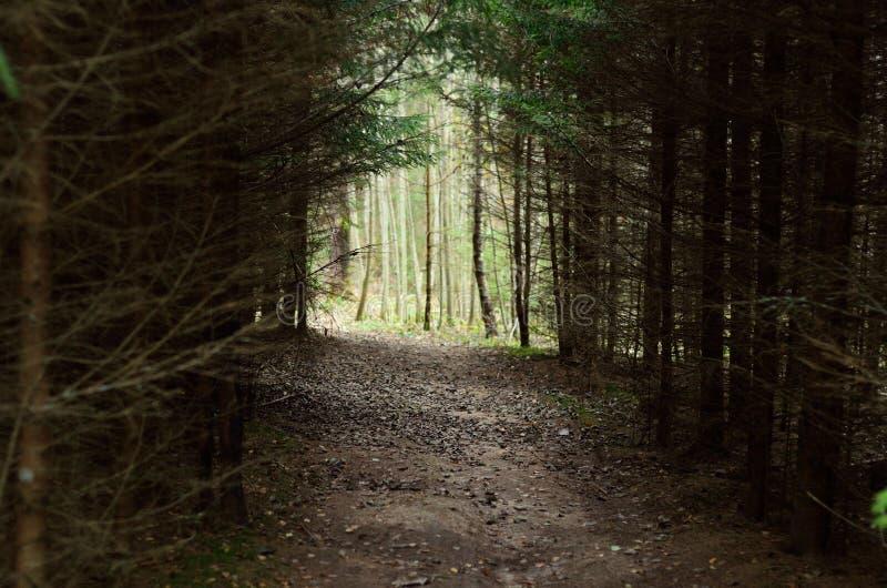 Fußweg durch den dichten Wald stockbilder