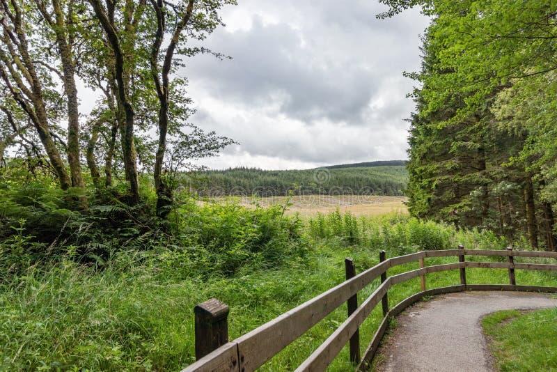 Fußweg durch Hafren-Wald, Wales, mit einem stürmischen Sommerhimmel und -ansicht über üppige Landschaft lizenzfreie stockbilder