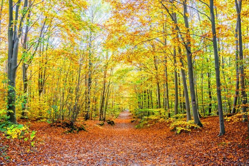 Fußweg in einem Wald im Herbst, lizenzfreies stockfoto