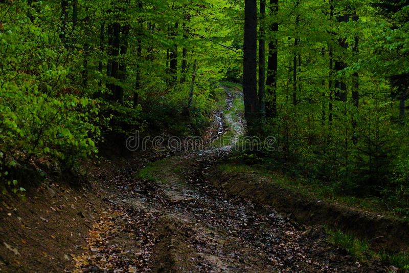 Fußweg im grünen Wald stockfoto