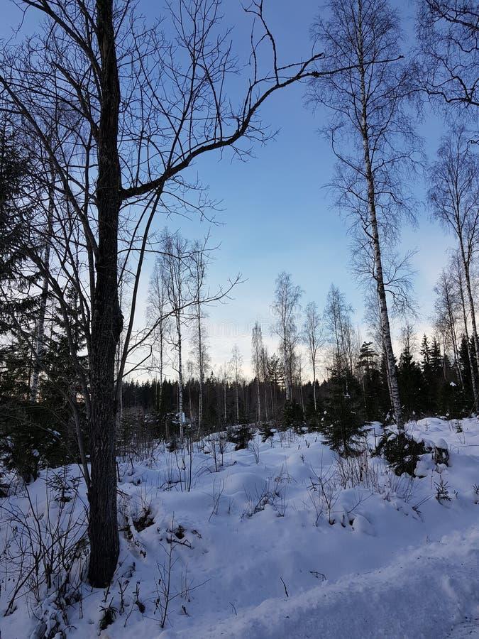 Fußweg im Holz stockfotos