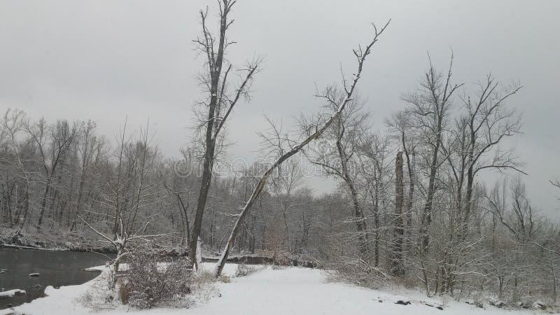 Fußweg im Holz stockbild