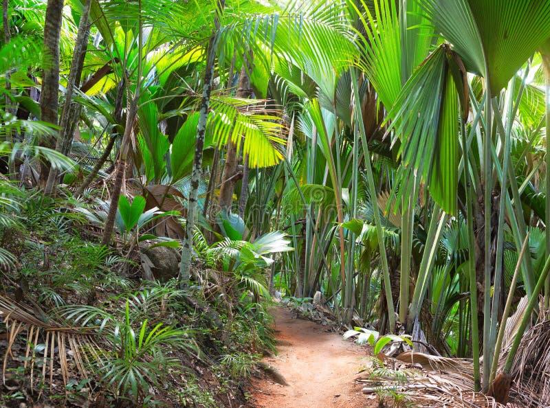 Fußweg im Palmenwald-Mai-Tal Vallee De Mai, Insel von Praslin, Seychellen stockfotos