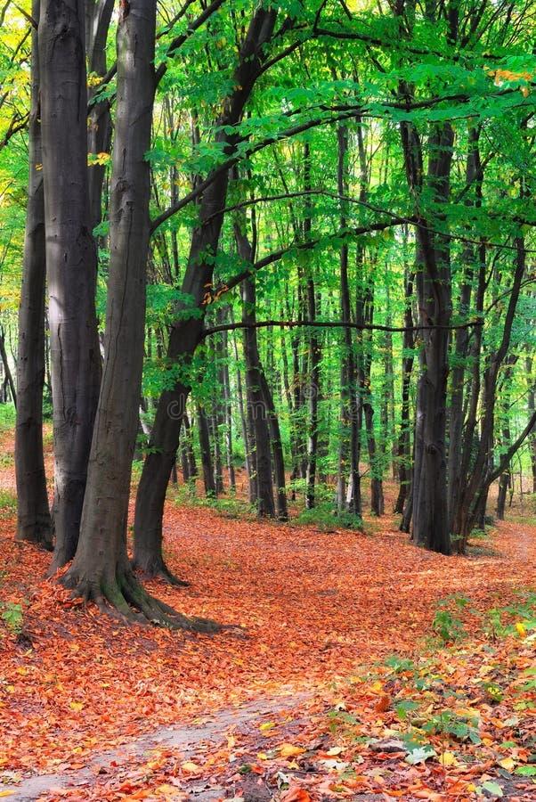 Fußweg im Wald lizenzfreies stockbild