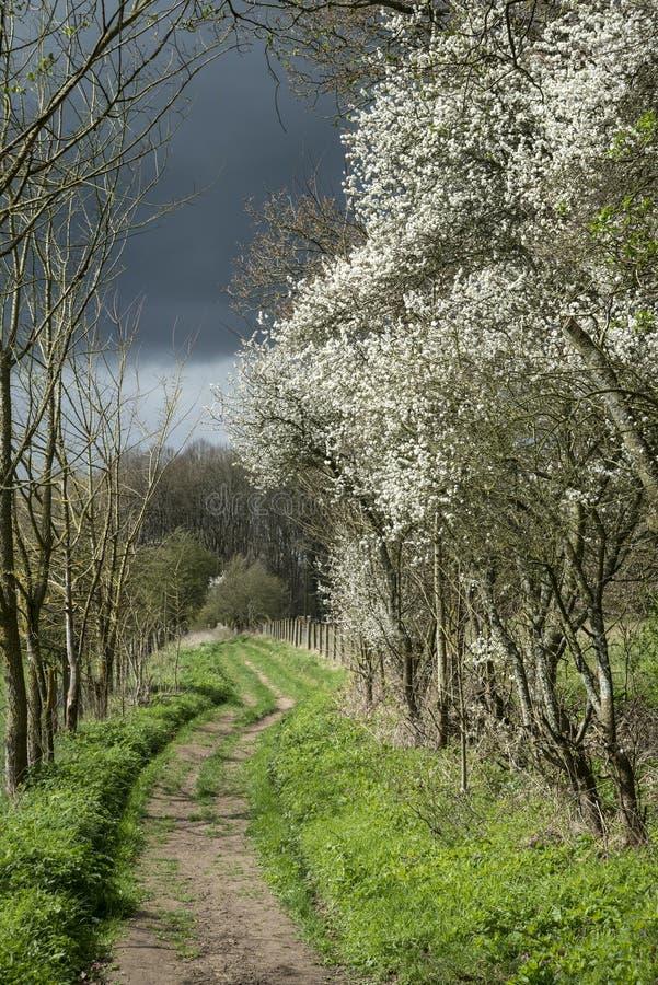 Fußweg in stürmischem englischem landsca Landschaft des Wetters im Frühjahr lizenzfreies stockfoto