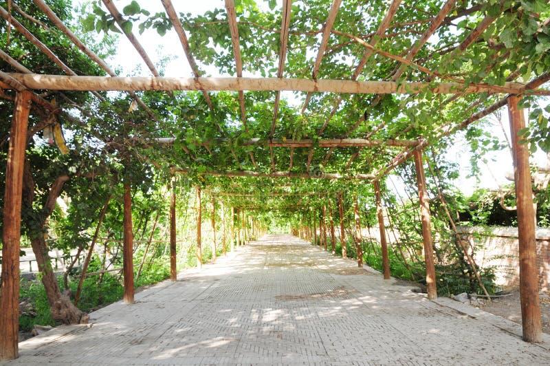 Fußweg unter der grünen Rebe stockfoto
