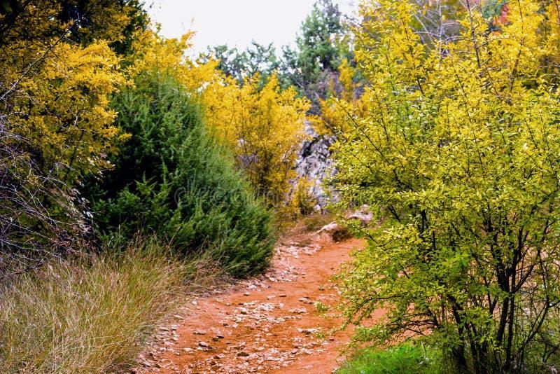 Fußweg unter Herbstfarben stockfoto