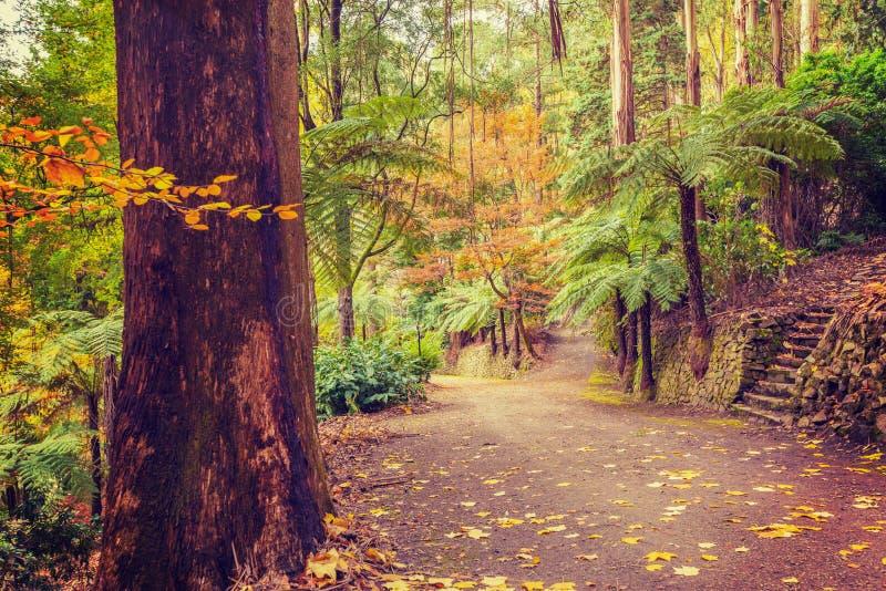 Fußwegenschnitt in einem tropischen Wald im Fall lizenzfreie stockbilder