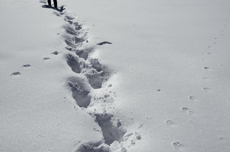 Fu?drucke auf Schnee lizenzfreies stockfoto