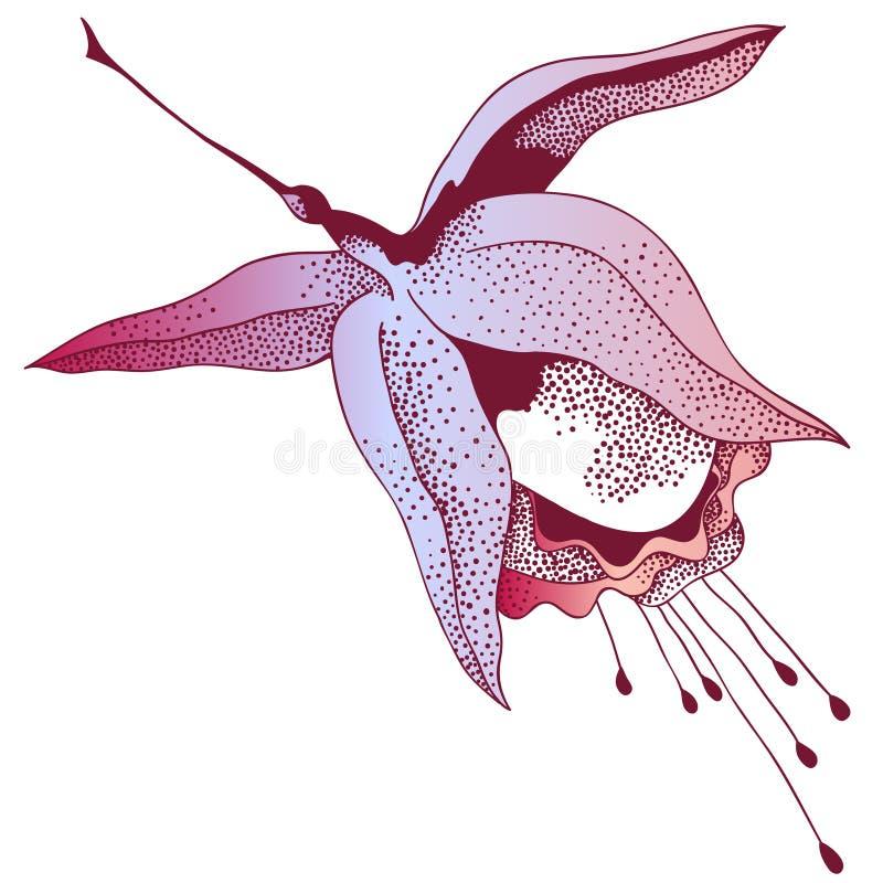 fuchsia stock abbildung