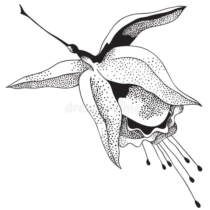 fuchsia vektor abbildung