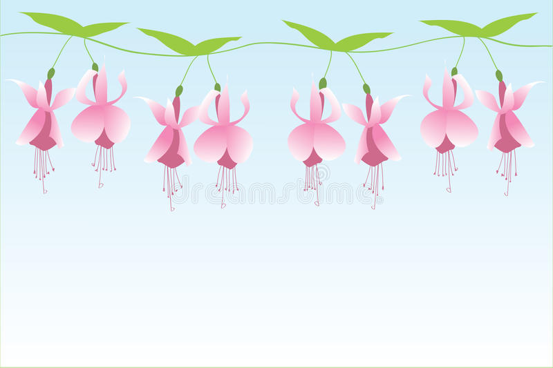 Download Fuchsia row stock vector. Image of eight, line, pink - 13234500