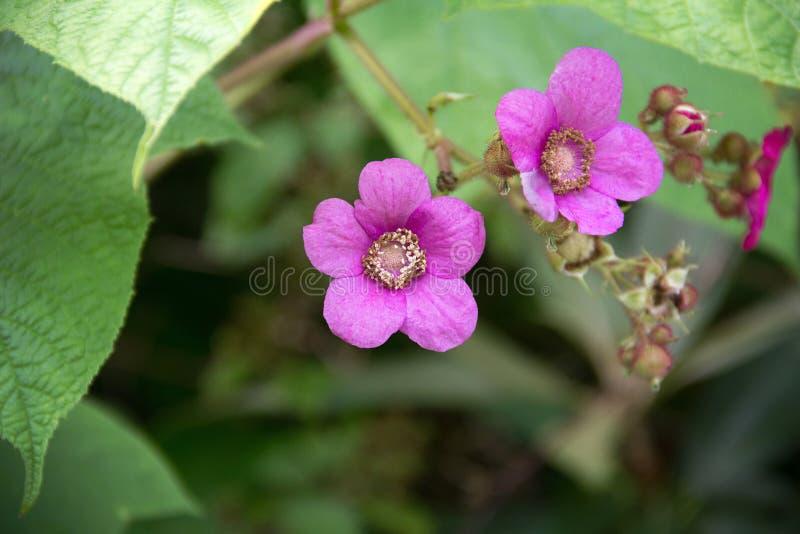 Fuchsiakleurig bloemen stock afbeeldingen