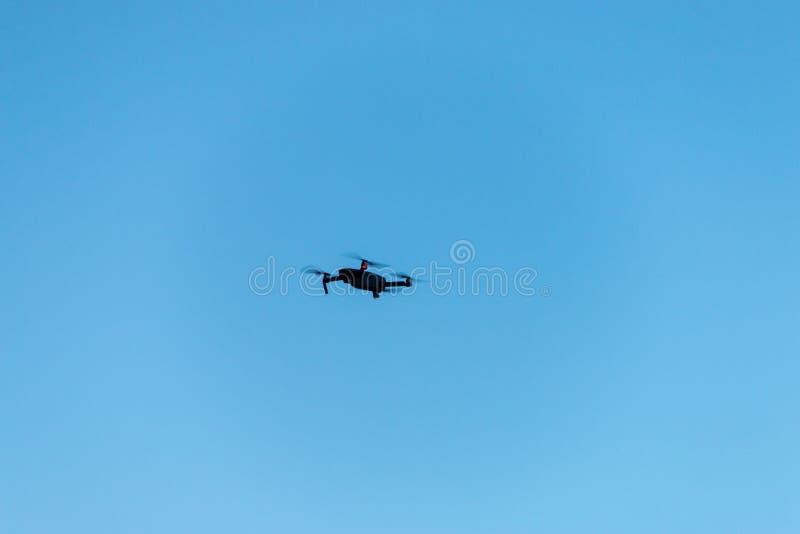 Fuco di volo nell'aria fotografia stock libera da diritti