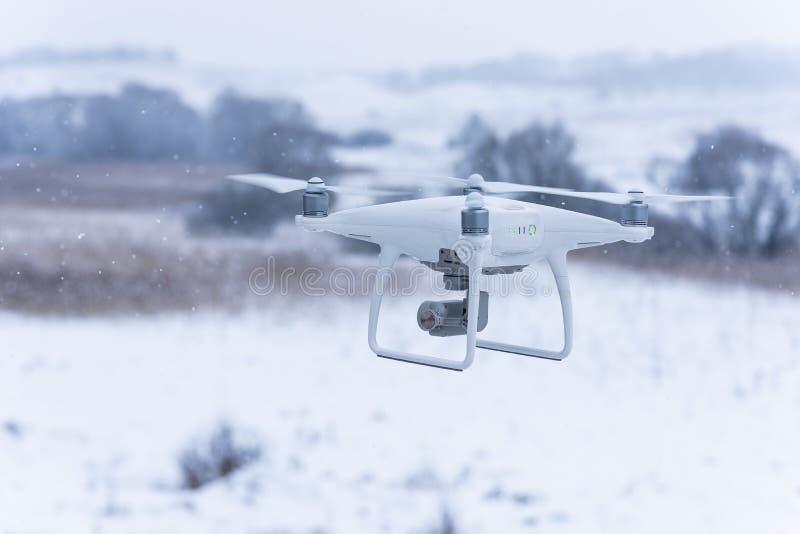 Fuco librantesi che prende le immagini della natura selvaggia Tempo freddo di inverno Giorno nuvoloso con neve di caduta immagine stock libera da diritti