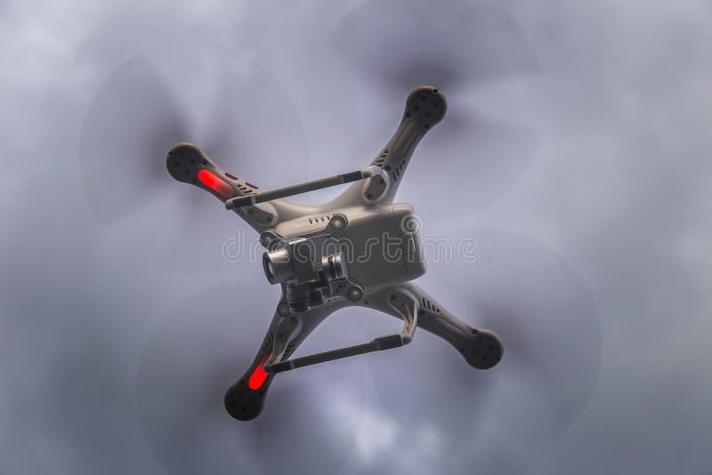 Fuco volante contro il cielo immagini stock