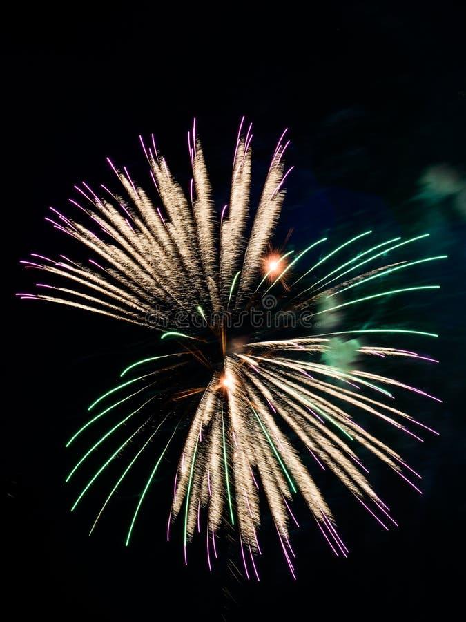 Fuego artificial único de la forma de la sola flor multicolora del pájaro, celebración fotografía de archivo libre de regalías