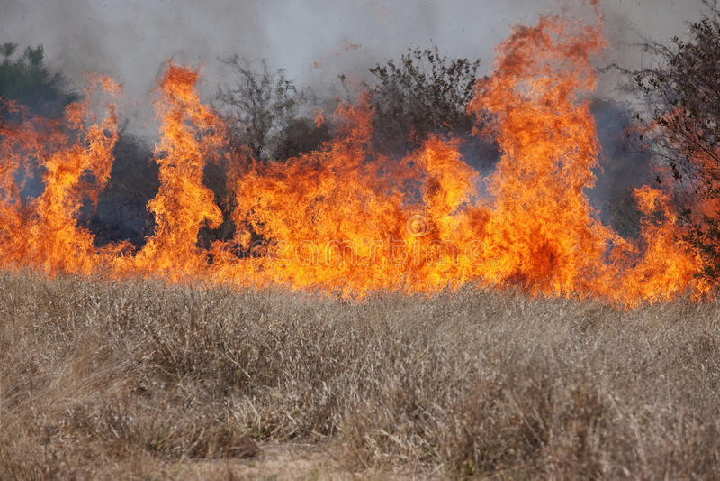 Fuego de Bush imagen de archivo libre de regalías