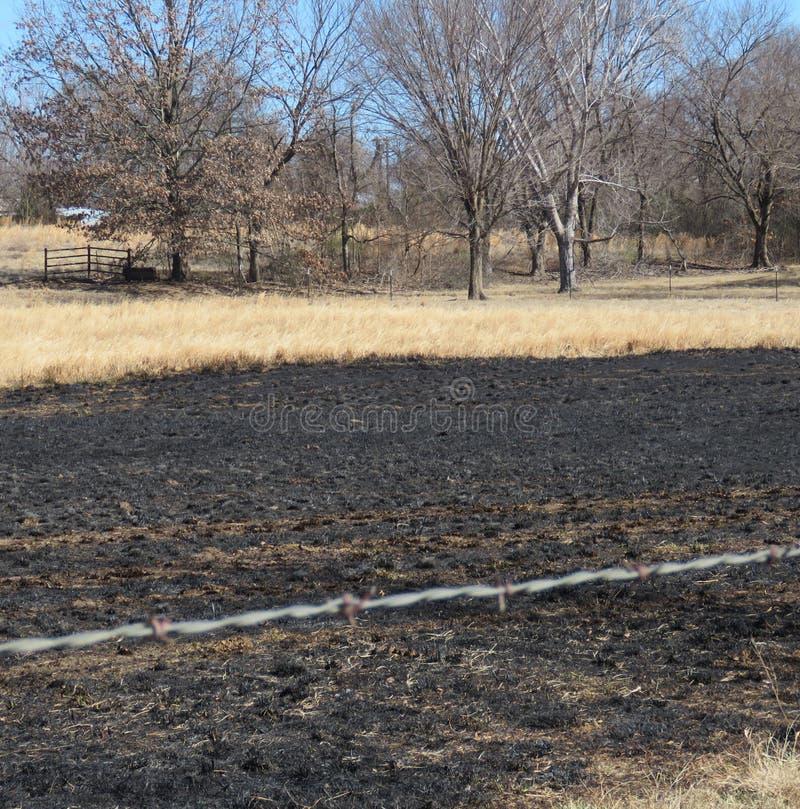 Fuego de la hierba, prado quemado o pasto imagen de archivo
