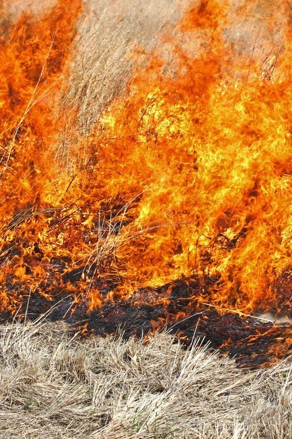 Fuego de la pradera imagen de archivo libre de regalías