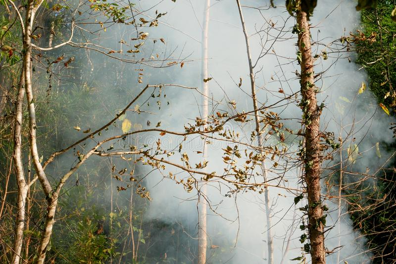 Fuego de la pradera del humo Resplandores de la hierba seca entre la destrucción de los arbustos de bosques fotografía de archivo