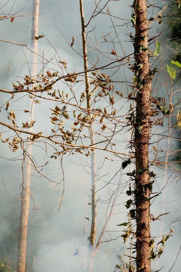 Fuego de la pradera del humo Resplandores de la hierba seca entre la destrucción de los arbustos de bosques foto de archivo