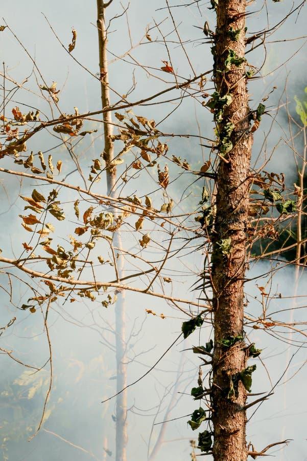 Fuego de la pradera del humo Resplandores de la hierba seca entre la destrucción de los arbustos de bosques fotos de archivo libres de regalías