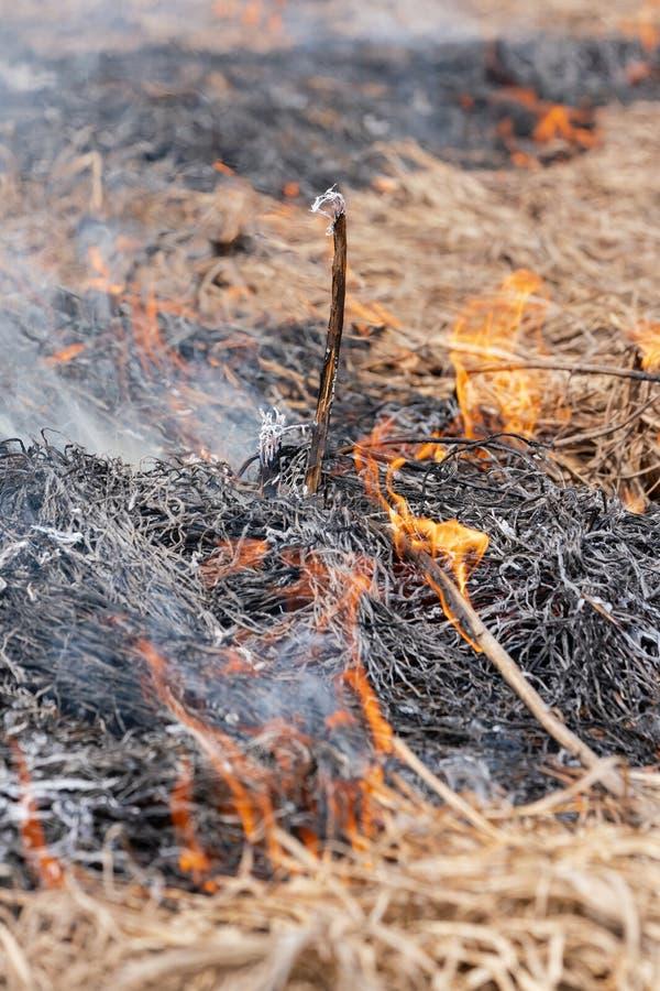 Fuego en bosque en la primavera Foco suave, falta de definición del incendio fuera de control foto de archivo libre de regalías
