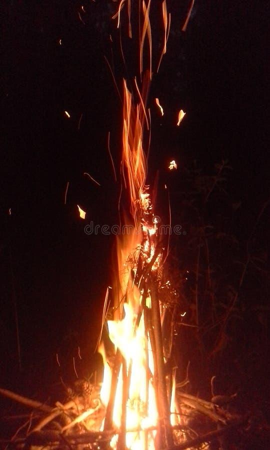 Fuego en el bosque fotos de archivo