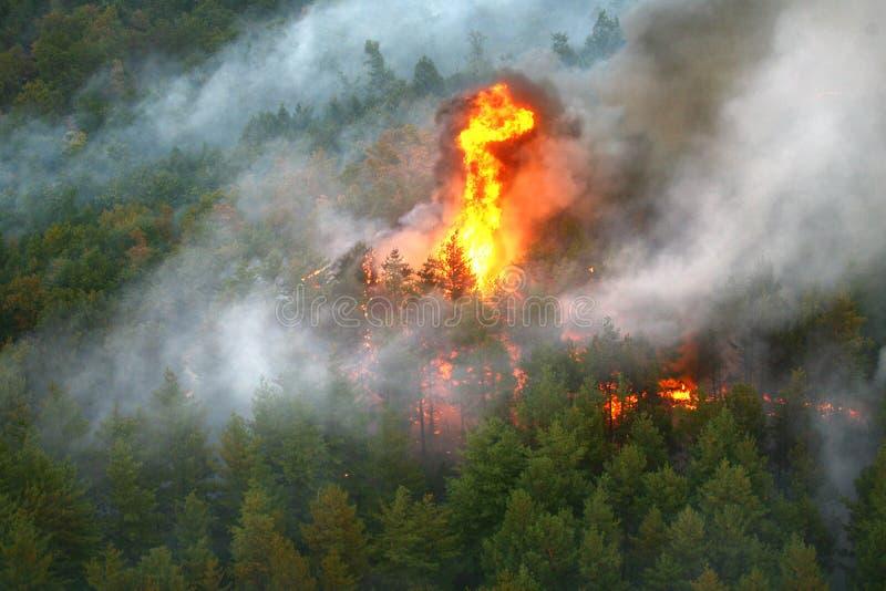 Fuego en el bosque del incendio fuera de control fotos de archivo libres de regalías