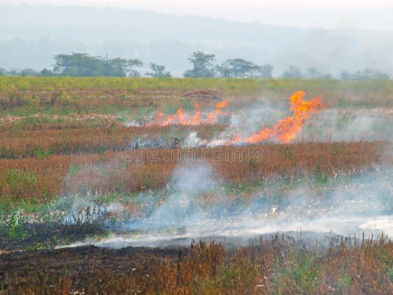 Fuego en el campo fotos de archivo libres de regalías